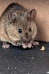 Of mice and caravans: Protect against vermin in caravans